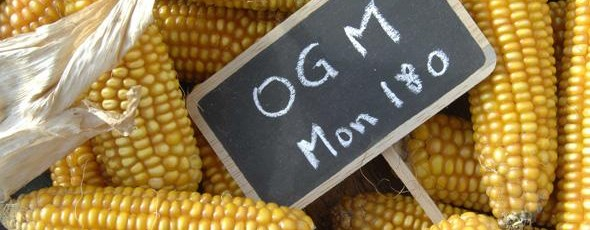 Rapport de Frédérique Ries sur la culture des OGM:  État des lieux avant le vote de la commission environnement ce mardi 11 novembre