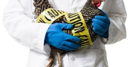 Santé animale : les députés intensifient la lutte contre les maladies transmissibles