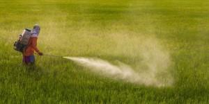 pesticides_la_commission_europeenne_veut_a_nouveau_autoriser_le_glyphosate