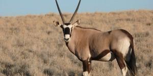 frederique-ries-mariee-femme-politique-especes-menacees-parlement-europeen-trafic-oryx