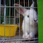 frederique-ries-femme-politique-parlement-europeen-cages-lapins-elevage-batterie