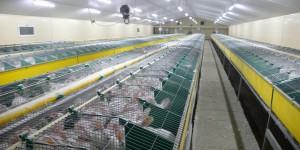 frederique-ries-femme-politique-parlement-europeen-cages-lapins-elevage-batterie-usine