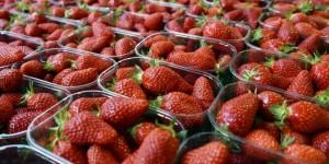 frederique-ries-mariee-femme-politique-parlement-europeen-fraises-pesticides-perturbateurs-endocriniens