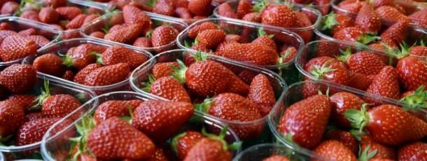 Des fraises espagnoles bourrées d'insecticides sur nos étals ? Frédérique Ries demande à la Commission d'intervenir