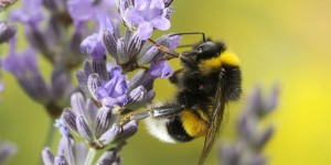 frederique-ries-mariee-femme-politique-parlement-europeen-abeilles-insecticides-tueurs-neonicotinoides
