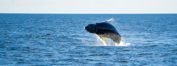 Chasse à la baleine : la Norvège tancée par le Parlement européen
