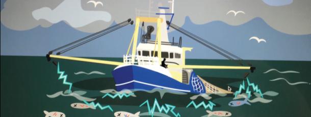 Les députés européens vent debout contre la pêche électrique